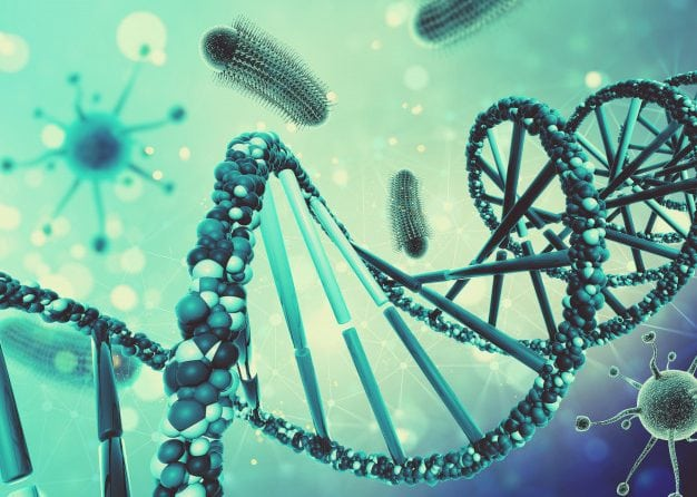 O que é o ADN Mitocondrial