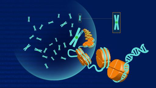 Teste de ADN Autossómico – O que é?